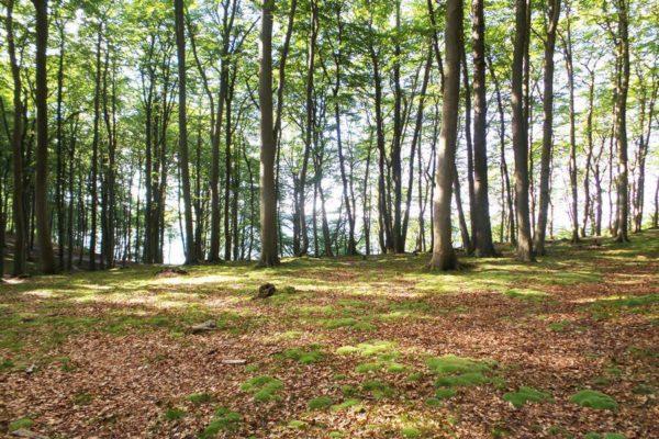 Wanderungen auf der Insel Rügen im Wald