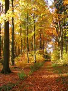 Wandern auf Rügen im Herbst