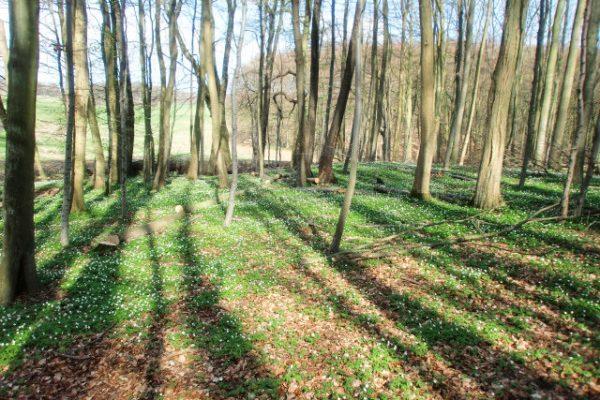 Wandern auf der Insel Rügen im Frühling