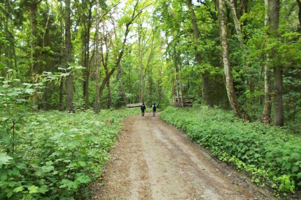 Waldspaziergang auf Rügen